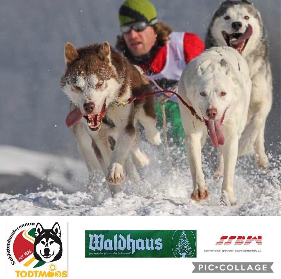 Husky Rennen Heringsdorf 2021