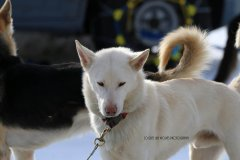 Todtmoos2007_Greylikewolves103.jpg