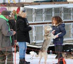 Todtmoos2007_Greylikewolves54.jpg