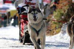 Todtmoos2007_Greylikewolves64.jpg