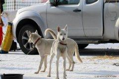 Todtmoos2007_Greylikewolves67.jpg