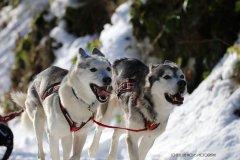 Todtmoos2007_Greylikewolves69.jpg