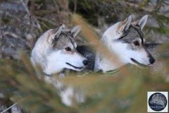 Todtmoos2007_Greylikewolves79.jpg