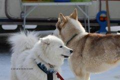 Todtmoos2007_Greylikewolves90.jpg