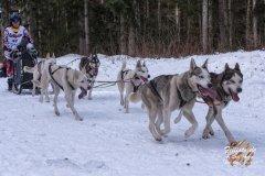 Internationales_Schlittenhunderennen_Todtmoos_12_von_49.jpg