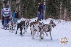Internationales_Schlittenhunderennen_Todtmoos_6_von_49.jpg